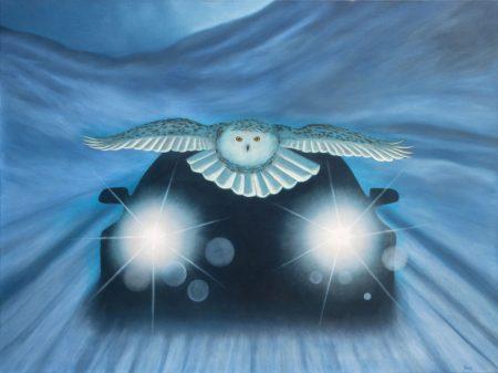 owl car snow